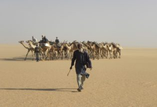 Camel driver in Northern Chad